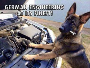 German Shepard