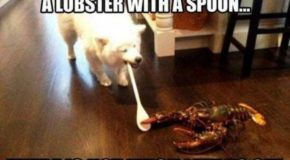Dogs vs Lobsters